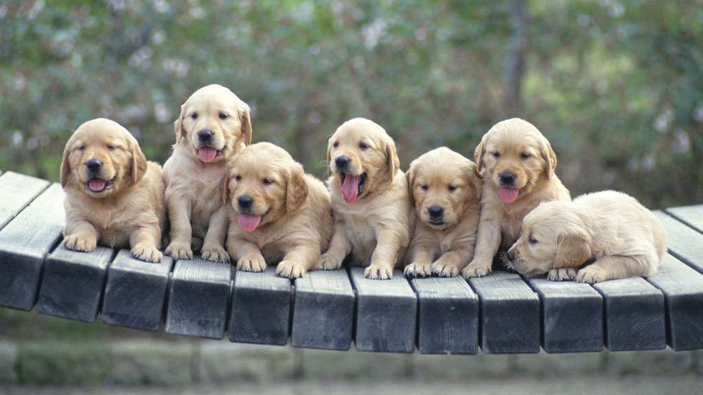 6988227-cute-little-dogs