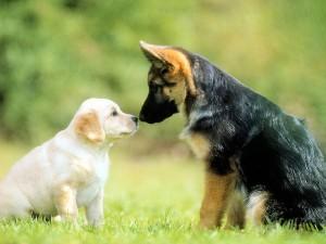 6784262-cute-dogs