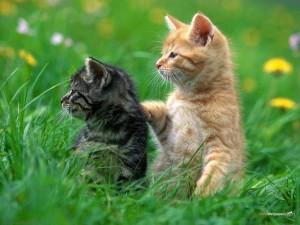 cats-kitten_00366149
