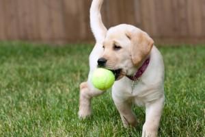 dog_image_0